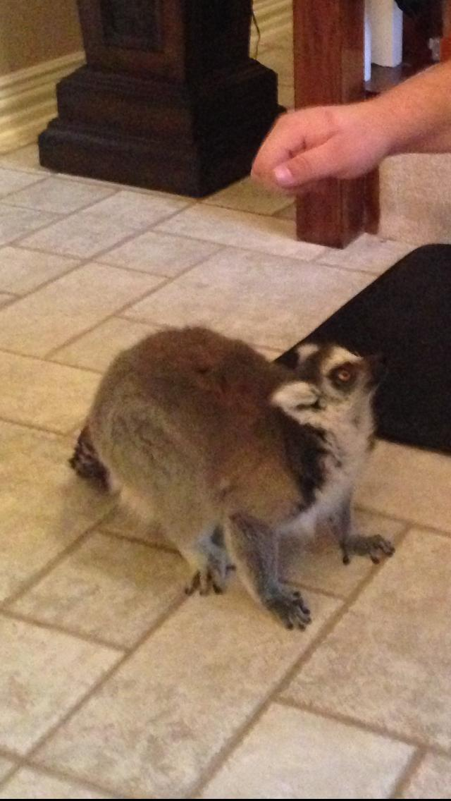 reddit lemur Redditors Who Work In Other Peoples Homes Reveal The Weirdest Stuff Theyve Seen