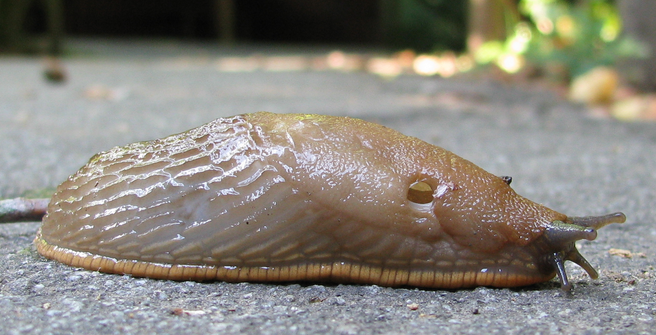 slug 0 Five Aliens From Star Wars That Basically Exist In Real Life