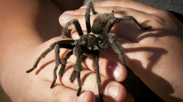Heres How You Can Get Over Your Fear Of Spiders In Two Minutes, Apparently spiders cure 3