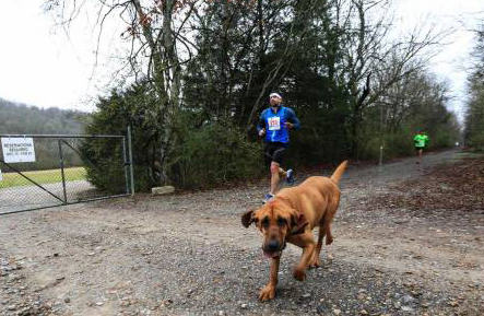 Dog Accidentally Runs Half Marathon, Finishes Seventh doggy3