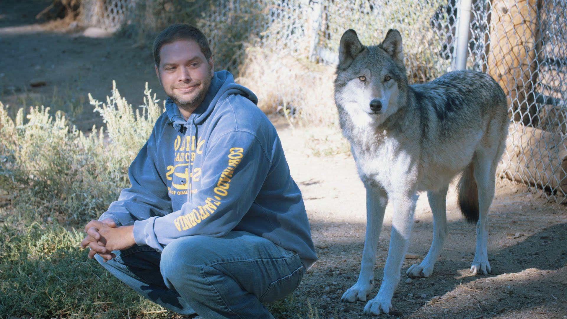 maxresdefault These Wolves Are Helping Veterans With Post Traumatic Stress Disorder Recover
