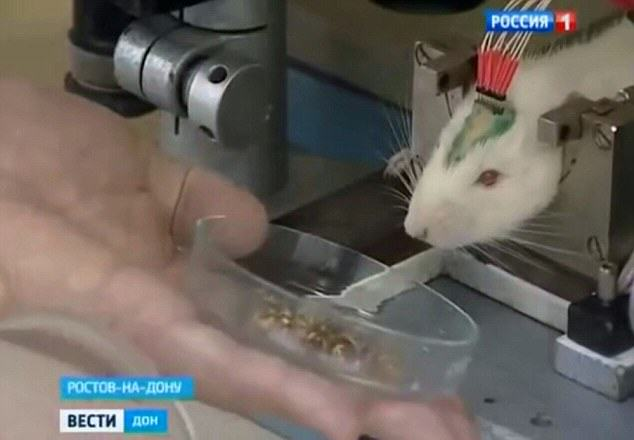 rats3 Vladimir Putins New Secret Weapon Against ISIS Is Absolutely Insane
