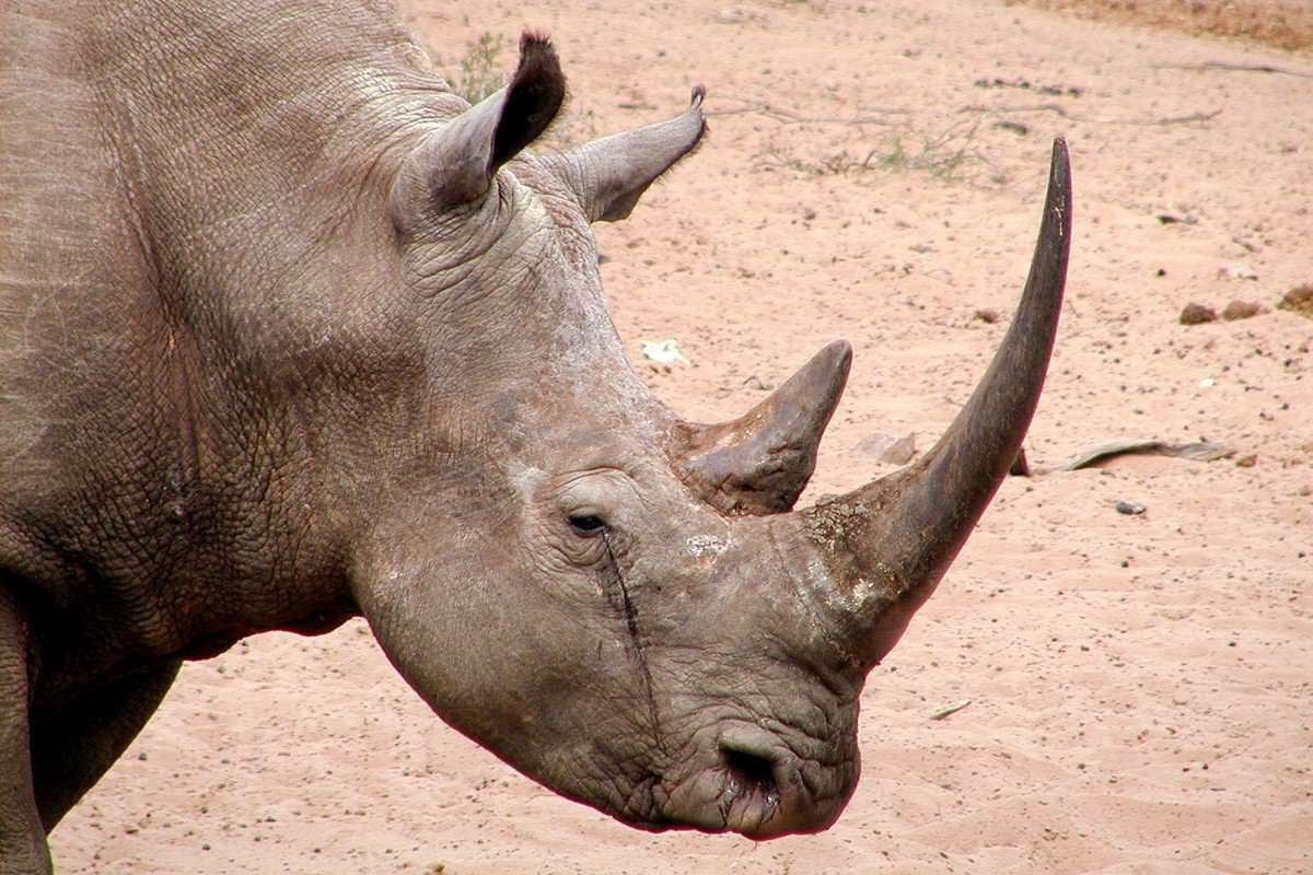 The SAS Are Getting Involved In The War Against Rhino Poachers