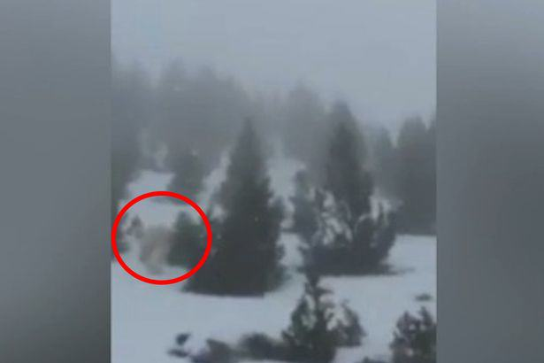 Yeti spotted in Spain Skiers In Panic Over Bizarre Video Apparently Showing Real Life Yeti
