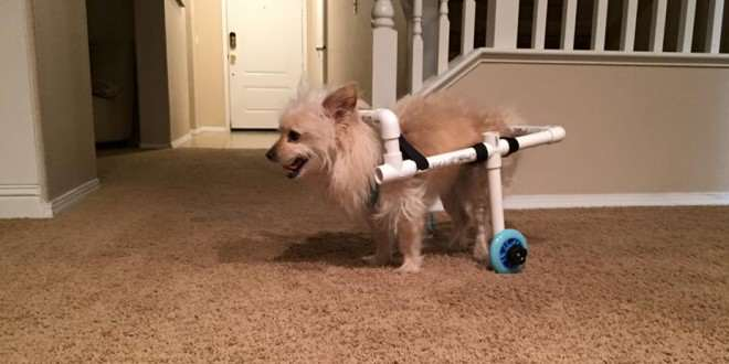 benny2 Guy Builds Awesome Homemade Wheelchair For Disabled Dog