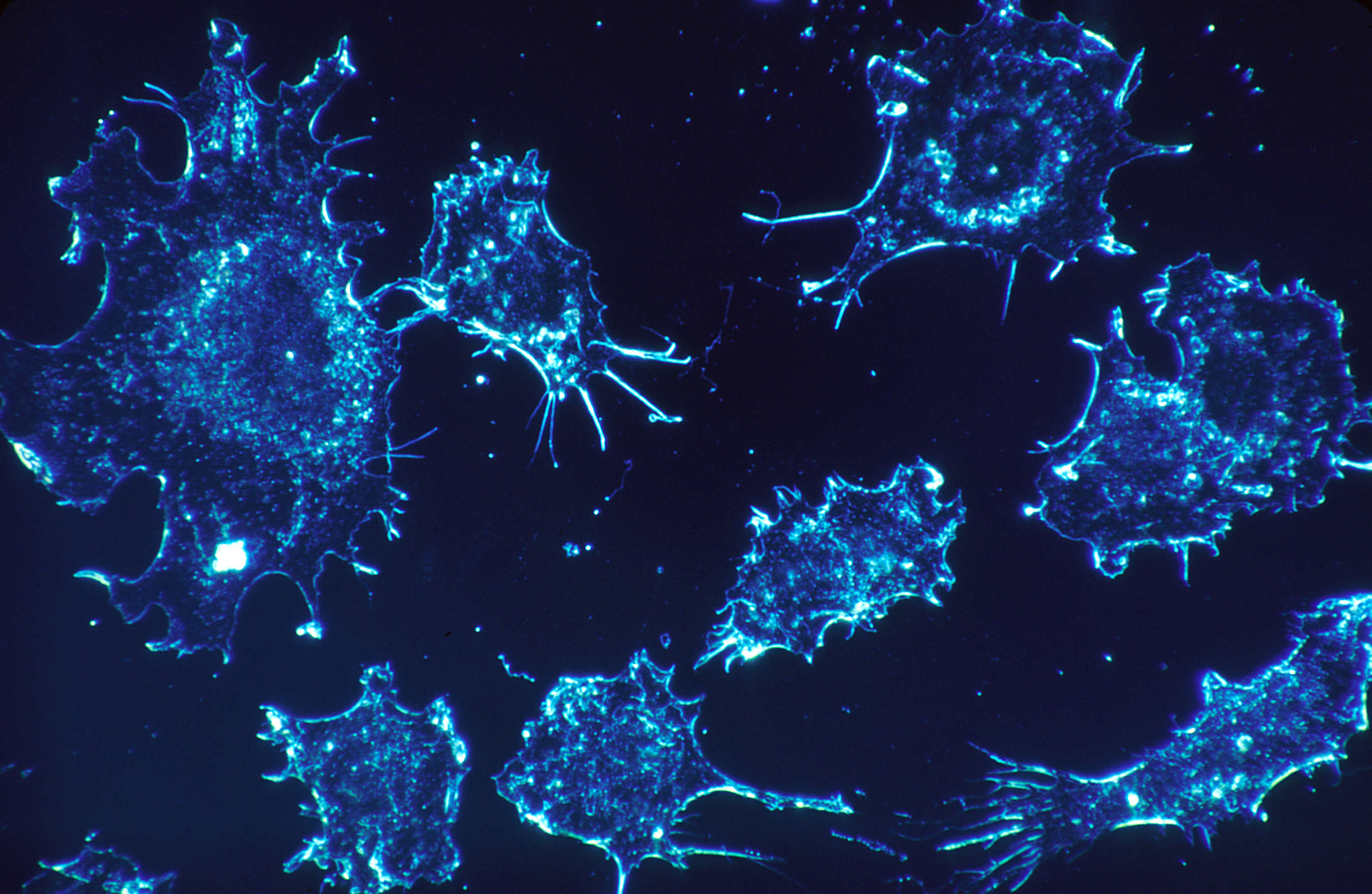 cancer4 Scientists Unveil Revolutionary Drug That Could Wipe Out Cancer