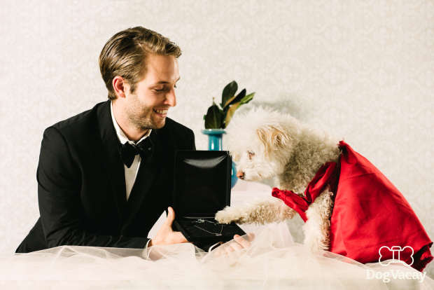 Dogs Recreate Famous Romantic Film Scenes For Valentines Day dogs recreate iconic movie scenes pretty woman
