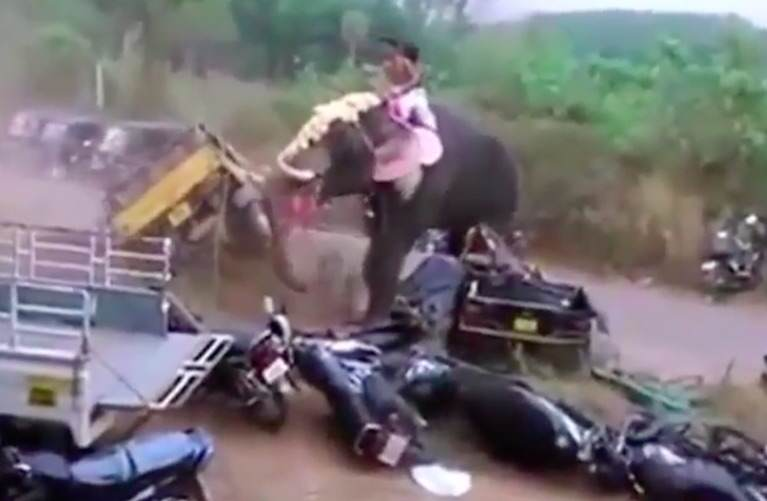 elephant1 1 Angry Elephant Smashes Up Vehicles During Raging Rampage