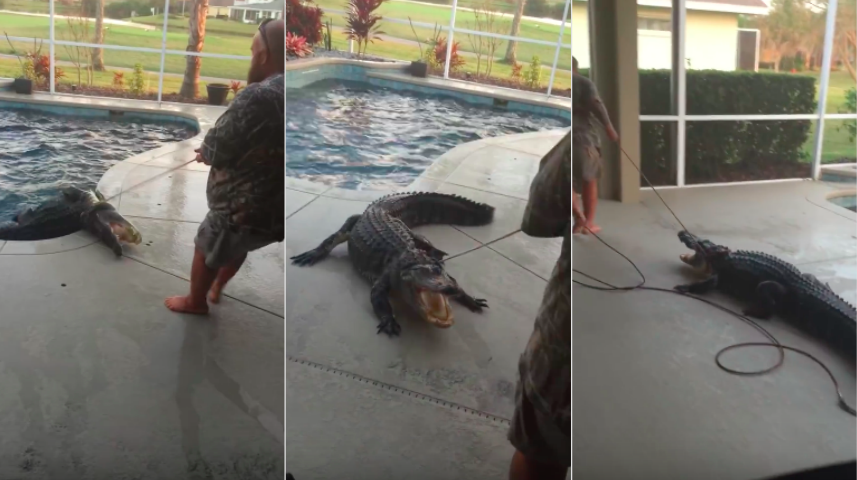 Screen Shot 2016 03 07 at 17.17.34 Watch This Guy Lasso A 9 Foot Alligator In Bare Feet