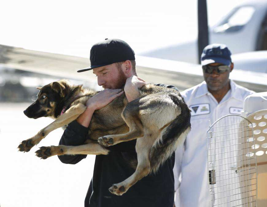 f dog a 20160319 870x673 Incredible Story Of Dog That Survived After Five Weeks Being Lost At Sea