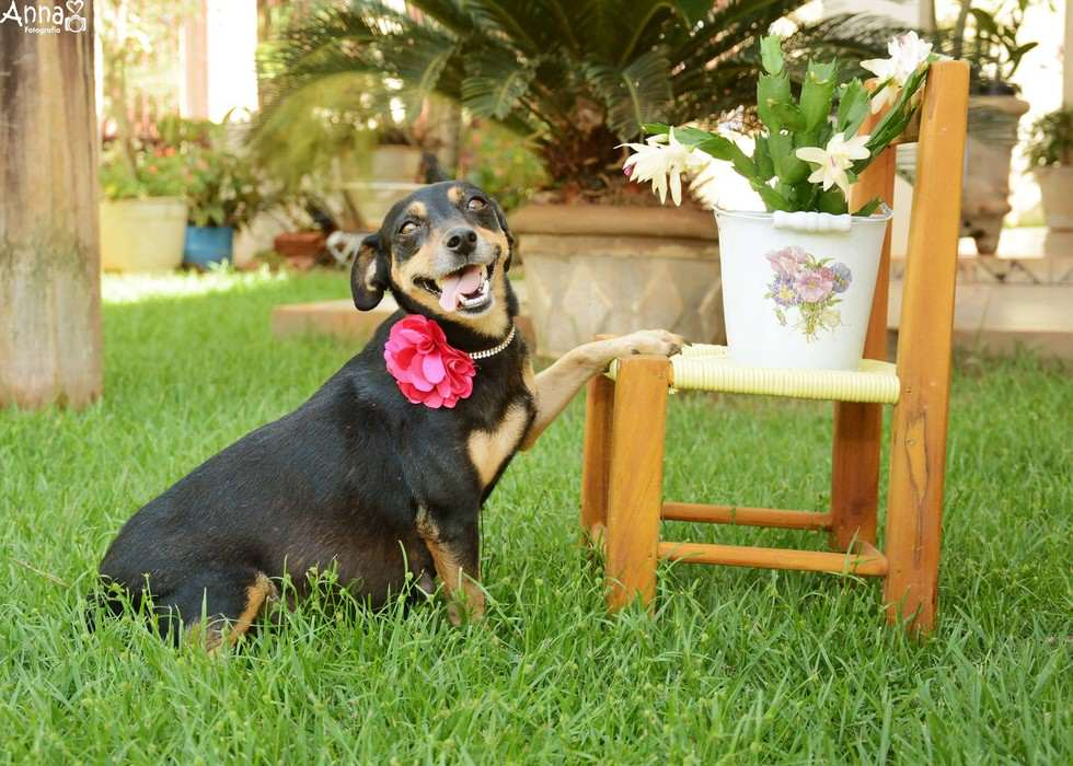 lil1 Pregnant Dog Is Totally Working It In This Photoshoot