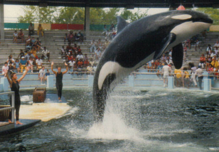 lolita1 Worlds Loneliest Orca Lolita To Remain At Seaquarium In Tiny Tank