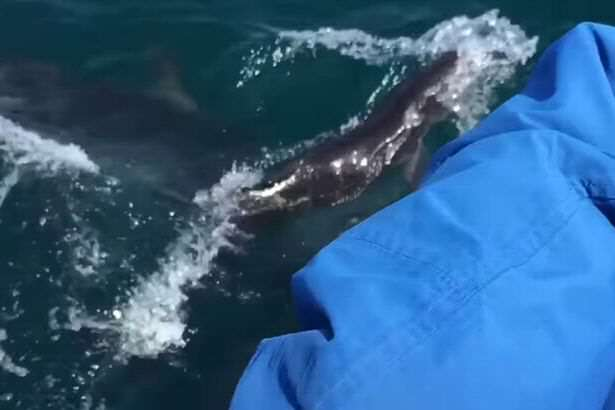 whale1 Video Captures Incredibly Rare Moment Whale Gives Birth