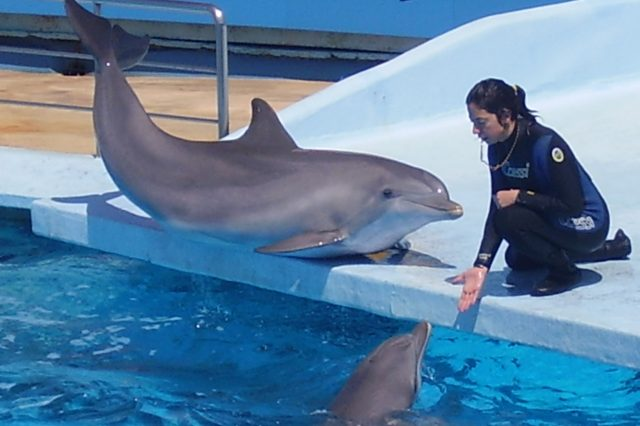 Dolphin and trainer 4 640x426 People Are Pretty Outraged As Dolphins Shipped To Desert