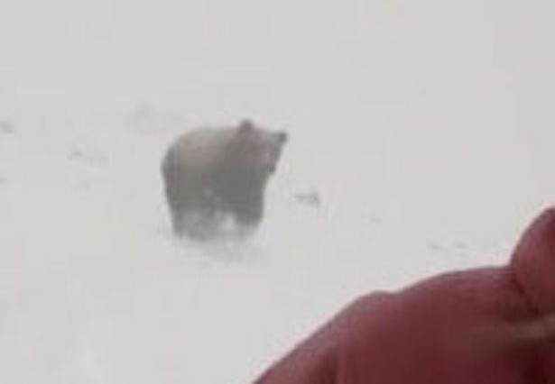 bear3 Theres Been A Plot Twist In The Snowboarder Chased By Bear Story