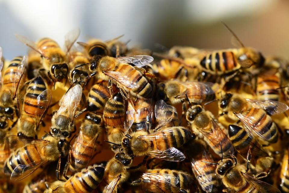 bees 1 NOPE: 20,000 Bees Chase Car After Queen Bee Stuck In Boot