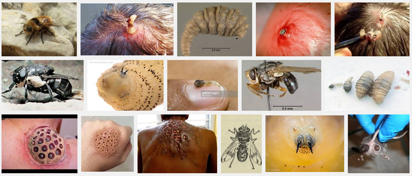 mouth larva 1 Heres Five F*cked Up Things You Should Definitely Avoid Googling