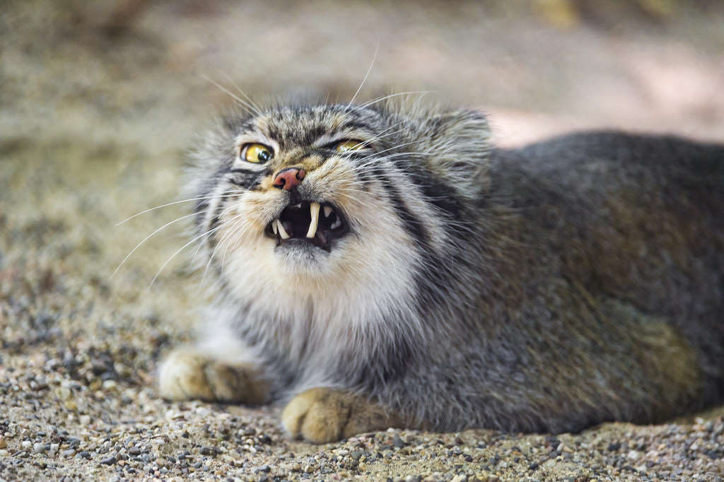 cat2 Couple Call Police After Being Held Hostage By Their Own Pet