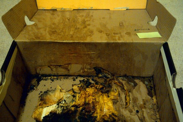 cumbox 2 640x426 NOPE: This Box Is The Most Hideously Disgusting Thing Ever