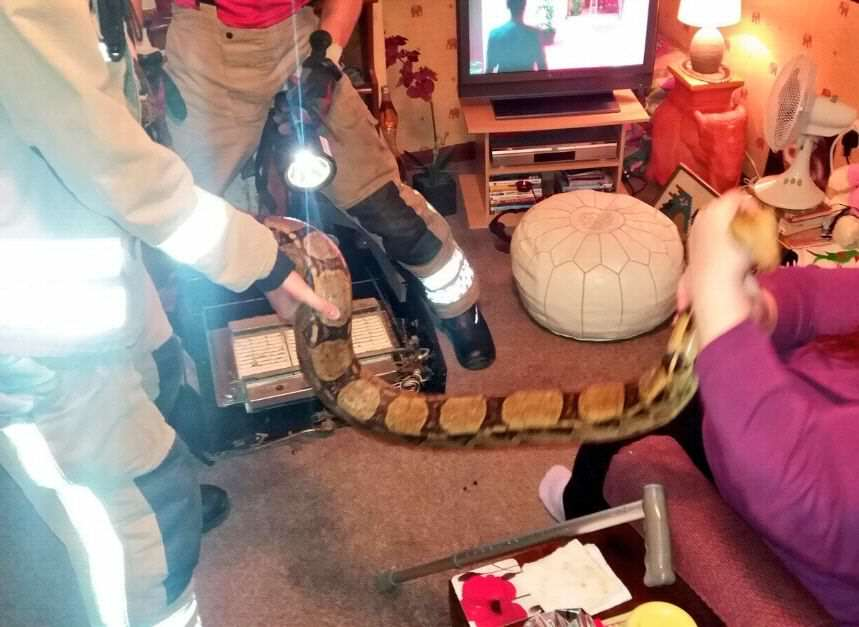 NOPE: Firefighters Wrestle 8 Foot Snake Out Of British Womans Fireplace https 2F2Fblueprint api production.s3.amazonaws.com2Fuploads2Fcard2Fimage2F1308922FSnake fireplace photo1