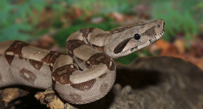 snake fb NOPE: Firefighters Wrestle 8 Foot Snake Out Of British Womans Fireplace