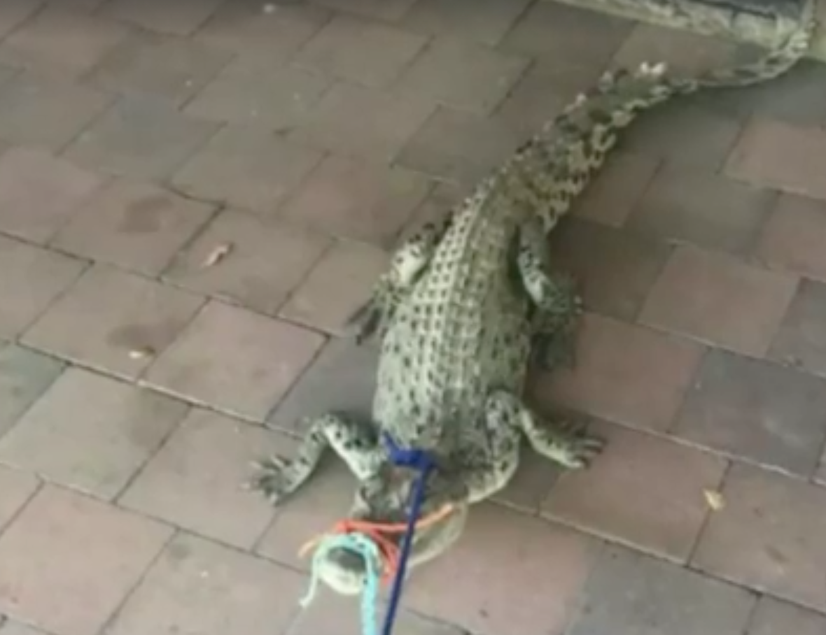 croc3 Teenager Wakes Up To Find Terrifying Prank In Her Bathroom