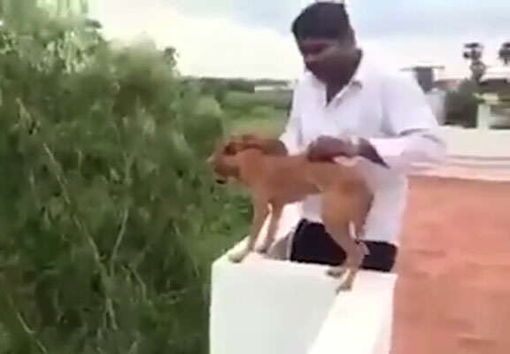 Dog Thrown Off Roof In Horrific Video Has Miraculously Been Found Alive dog web thumb 1 1