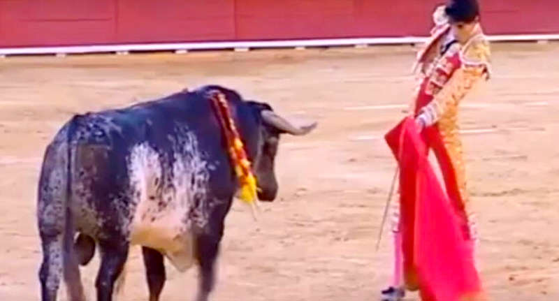 face mat 1 Brutal Footage Shows Spanish Matador Being Gored By Bull