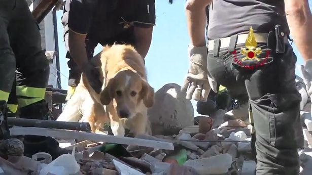 Sequence 11Still002 Incredible Moment Dog Is Rescued Nine Days After Italy Earthquake