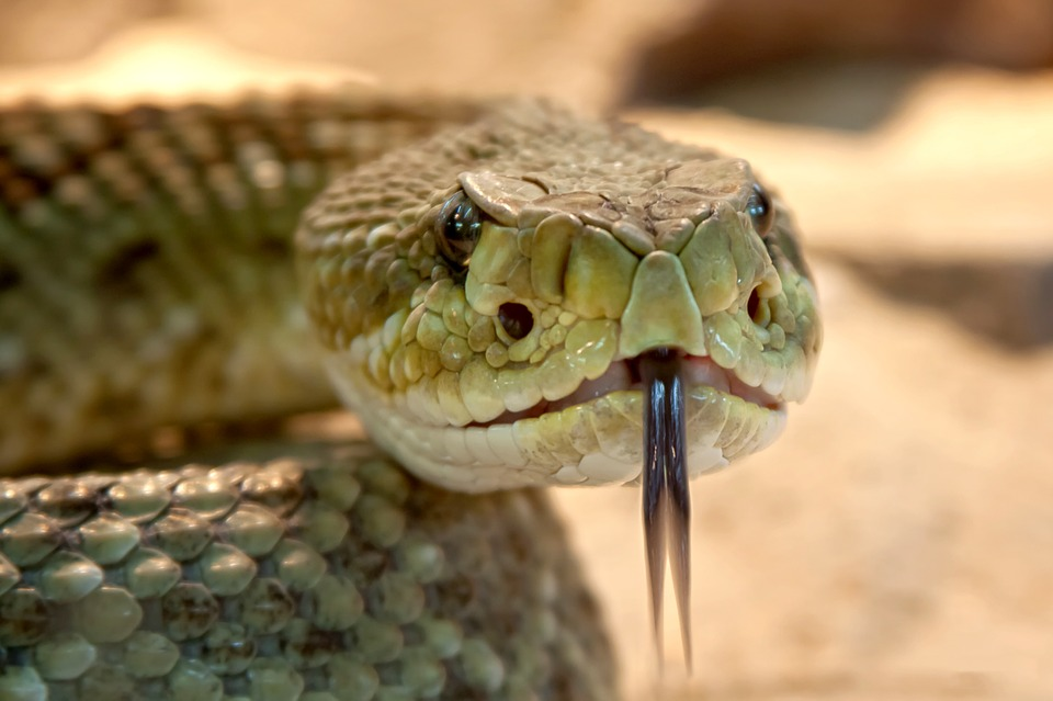 rattlesnake 653642 960 720 Terrifying Ways Creatures Are Evolving Just To F*ck With Us