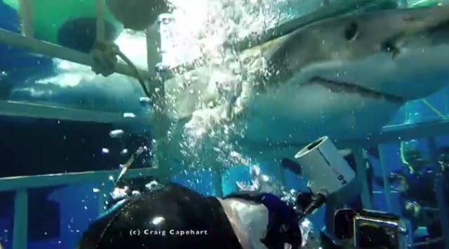 14104UNILAD imageoptim shark8 Terrifying Footage Shows Moment Great White Breaks Into Diving Cage