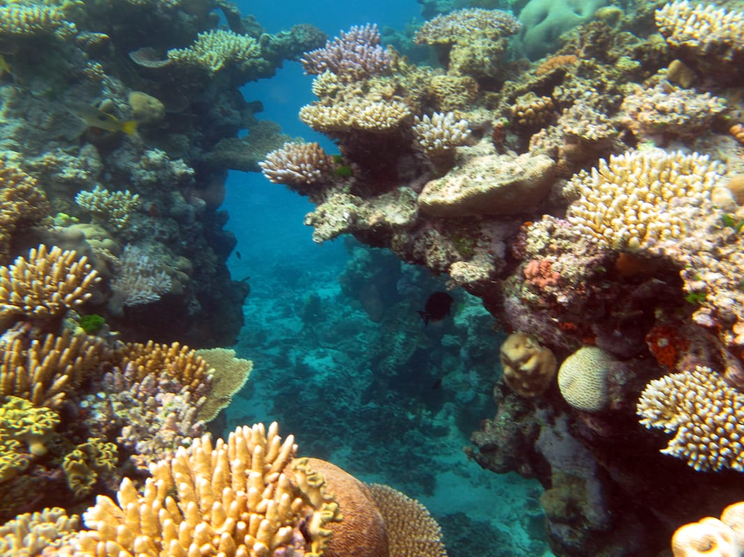36393UNILAD imageoptim Great Barrier Reef 008 5387514565 The Great Barrier Reef Has Been Pronounced Dead