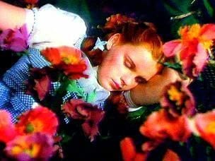 32989UNILAD imageoptim Dorothy sleeping amongst the poppies the wizard of oz 4284313 304 228 Napflix Is The Video Streaming Service That Helps You Sleep