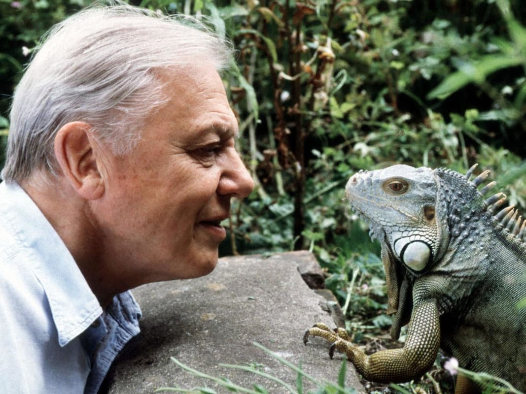 34880UNILAD imageoptim david attenborough bbc David Attenborough Receiving Death Threats After Controversial Joke