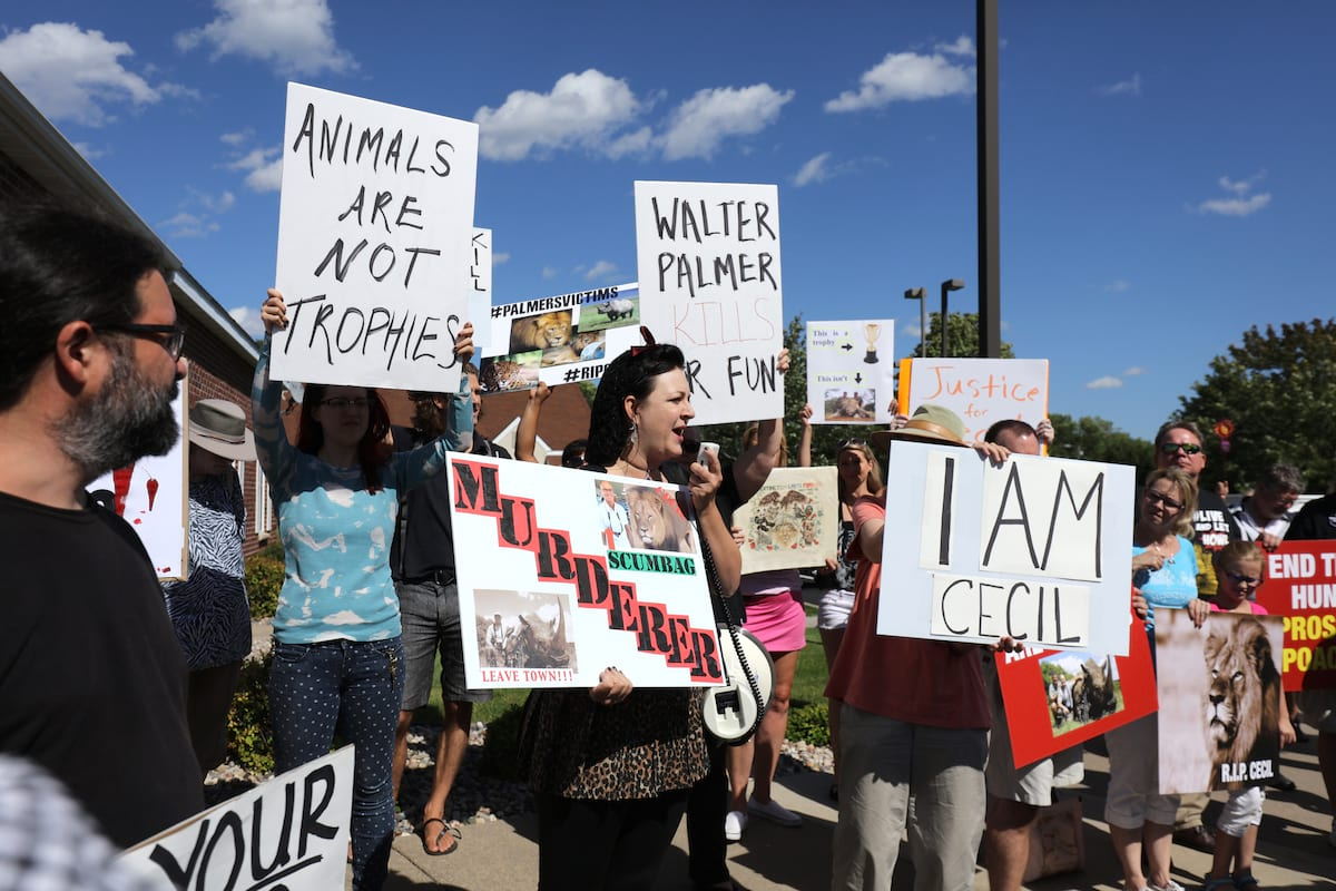 Charges Dropped Against Cecil The Lion Hunter 4746UNILAD imageoptim GettyImages 482298078