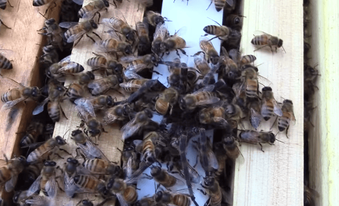 This Fight Between A Swarm Of Bees And Giant Spider Is Absolutely Savage 48538UNILAD imageoptim bee