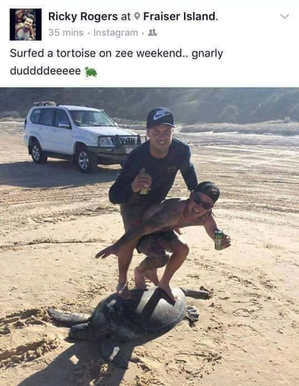 Complete Idiots Slammed By RSPCA After Surfing On Top Of Turtle 60153UNILAD imageoptim Two friends post a picture standing on top of a turtle