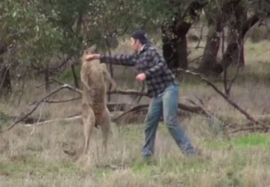 Zoo Makes 'Controversial' Decision On Future Of 'Kangaroo Puncher'