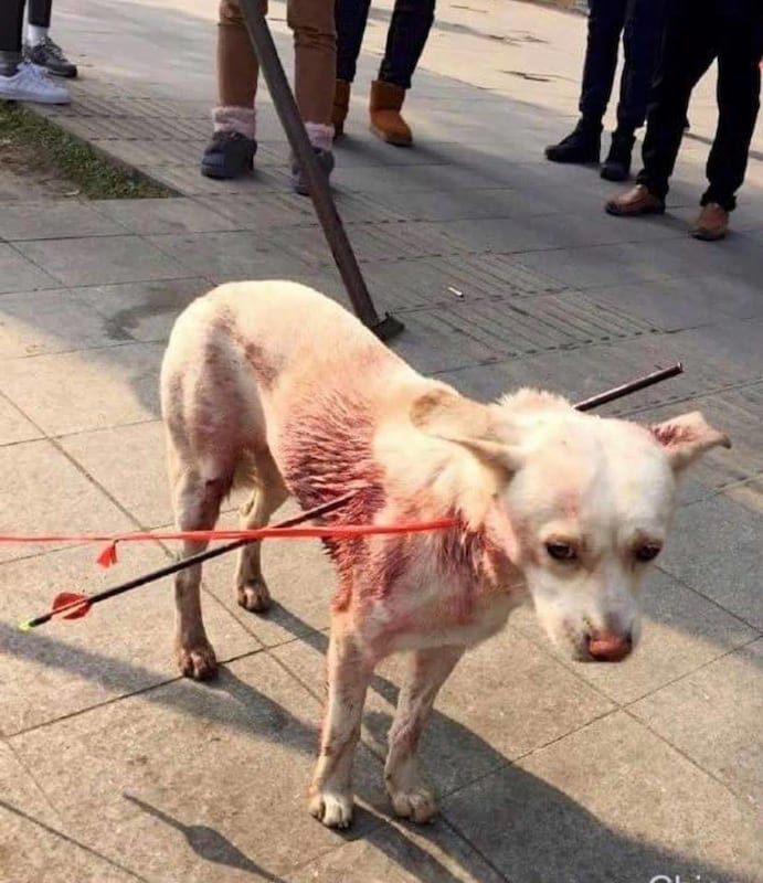 7574UNILAD imageoptim 15327260 352637215094380 1913319636923893972 n Dog Shot With Two Arrows Makes Incredible Recovery