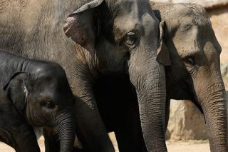 Herd Of Elephants Trample Poacher To Death