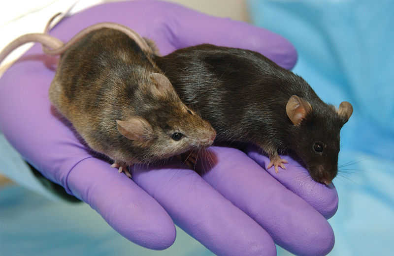 Kids Inherit Their Intelligence From Their Mum Apparently mice